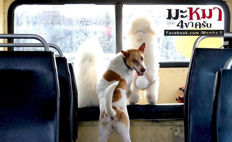 มะหมา 4 ขาครับ
