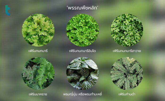 พรรณพืชหลัก