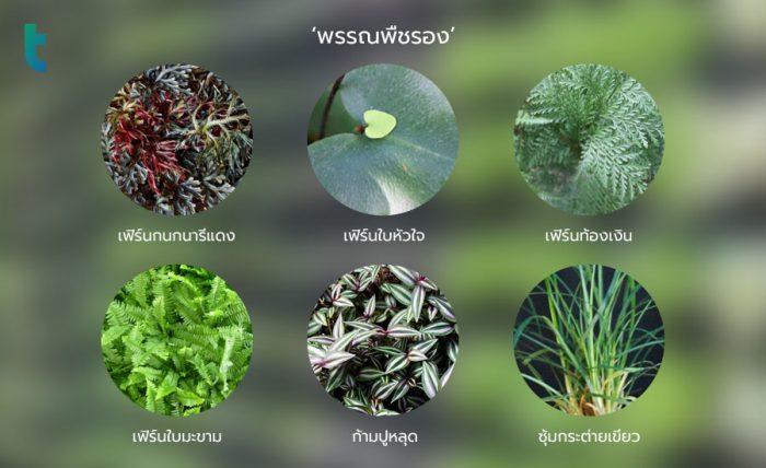 พรรณพืชรอง